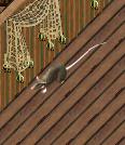 Ship Rat